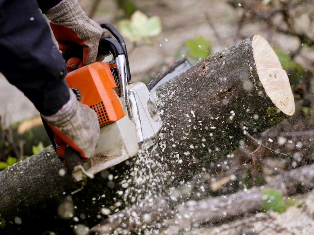 Tree Trimming, Tree Removal & Stump Removal